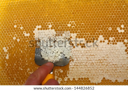 Removal of wax lids of  honeycombs prior to centrifugation - stock photo