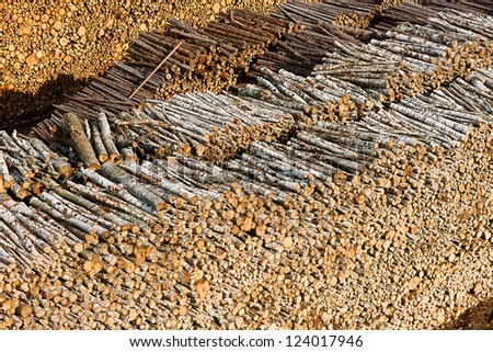 Renewable resource - raw timber materials ready for transportation in dock - stock photo