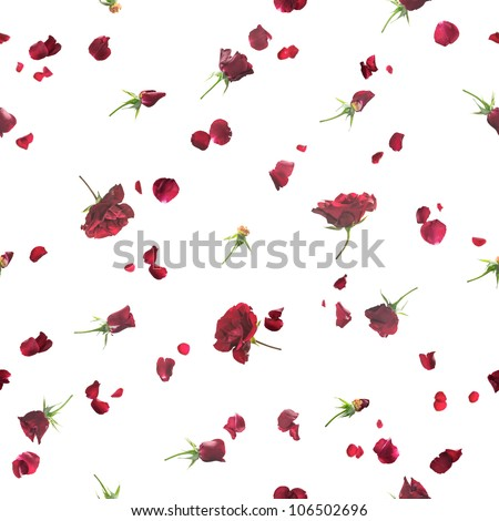 Repeatable background of fading, flying roses and petals in dark red, studio photographed with a back light, isolated on white - stock photo