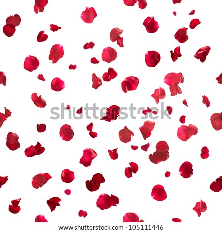 Repeatable rose petals in red, studio photographed with depth of field, isolated on white - stock photo