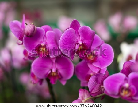 Repeated orchid flowers, selective focus. Beautiful orchids.