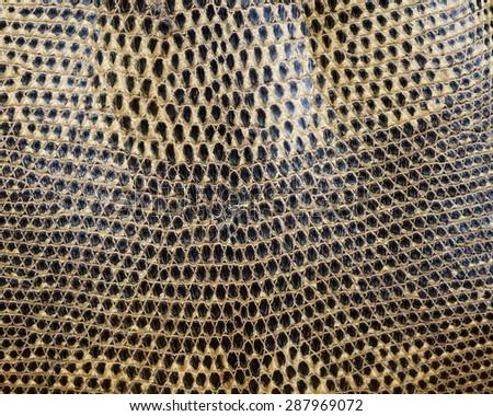 Reptile skin,snake skin  background. - stock photo