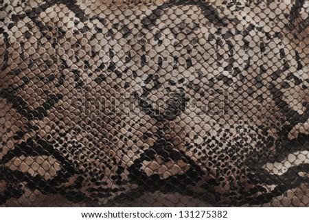 reptile skin texture closeup detail - stock photo