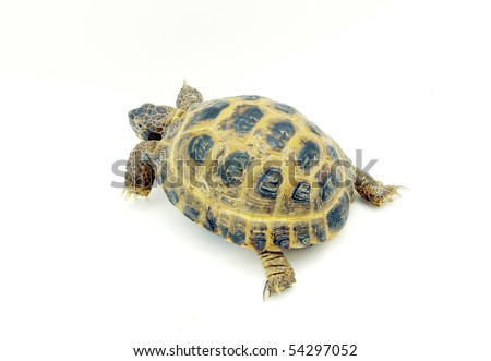 Reptile turtle - stock photo