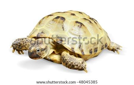 reptile turtle animal - stock photo