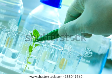 Research in chemistry, chemical reactions in the plant extraction equipment and glassware.