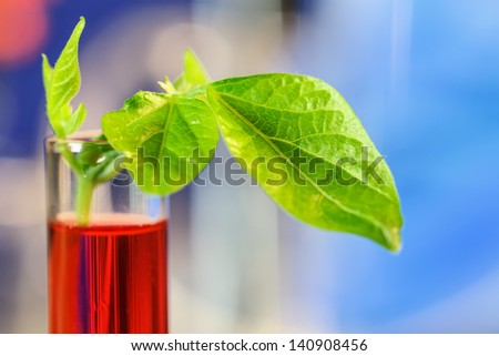 Research in plant biology laboratory - stock photo
