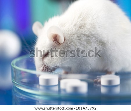 research on mauses in the laboratory  - stock photo
