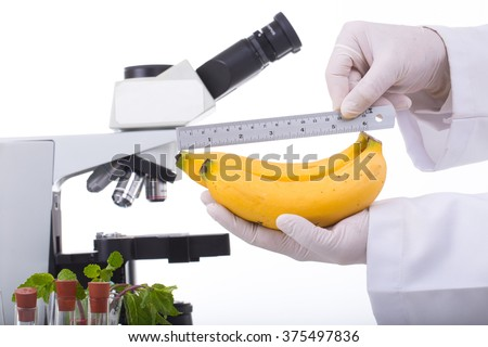 Researcher holding up a GMO fruit, banana. Genetically modified organism or GEO here transgenic plant is an plant whose genetic material has been altered using genetic engineering techniques - stock photo