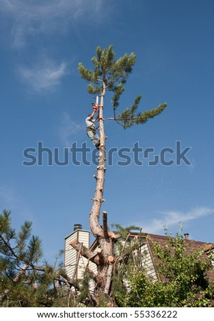 Residential tree trimming, topping and removal - stock photo