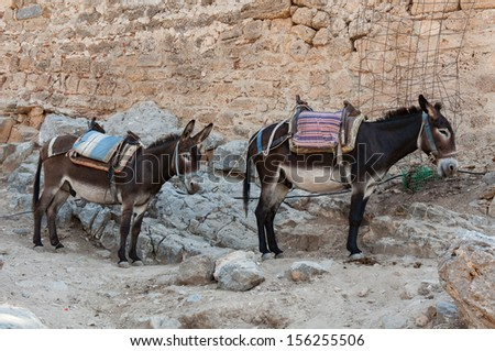 Resting donkeys in Acropolis of Lindos