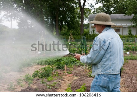 retired man watering the plants in a community garden - stock photo