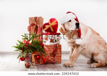 retriever puppy in a New Year's interior