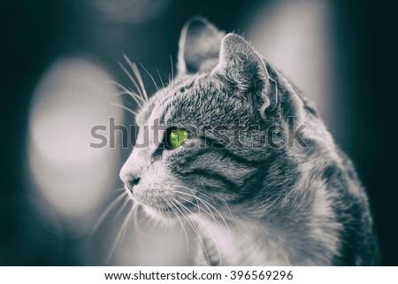 Retro Filter Of Domestic Cat Profile Portrait - stock photo