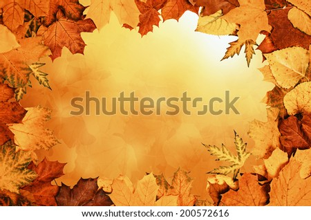 Retro frame from vivid colorful autumn leaves, natural seasonal background - stock photo