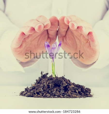 Retro image of man protecting purple sprouting spring freesia cupping his hands over the delicate flower and mound of rich organic earth in a conservation of the environment and ecology concept. - stock photo