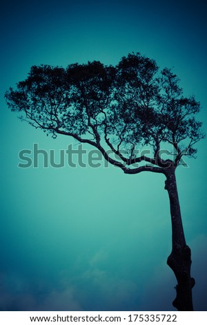retro lonely tree against the blue sky - stock photo