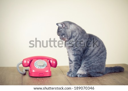 Retro rotary telephone and big cat on table - stock photo