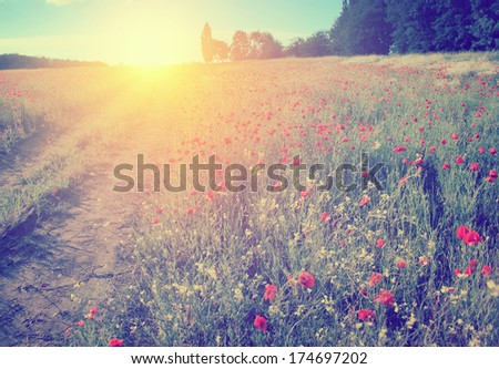 Retro summer scene - stock photo