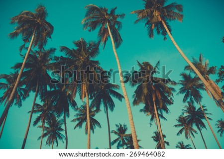 Retro toned palm trees on over sky background - stock photo
