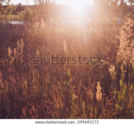 Retro Vintage Soft Focus With Grass And Flowers and Lens Flare - stock photo