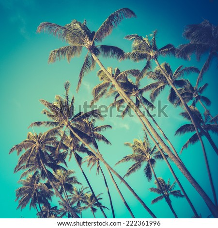 Retro Vintage Style Photo Of Diagonal Palm Trees In Hawaii - stock photo