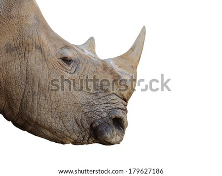 Rhino. - stock photo