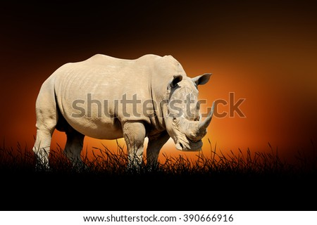Rhino against on the background of african sunset - stock photo