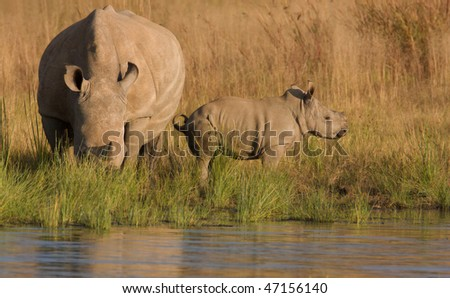 rhino and baby - stock photo