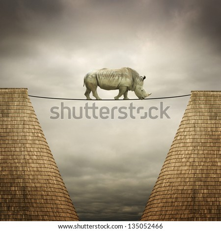 rhino balanced on the line between two buildings