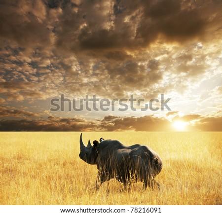 rhino  in Etosha Park - stock photo