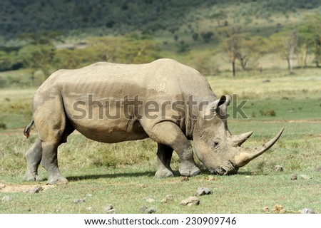 Rhino in the National Reserve of Africa, Kenya - stock photo