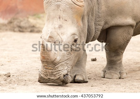 rhino in the park on the nature