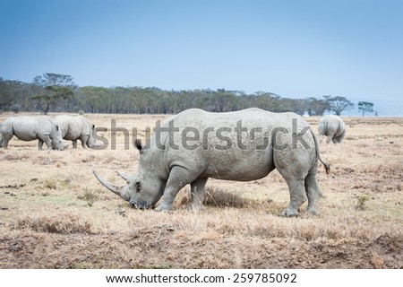 rhino in the wide of Africa