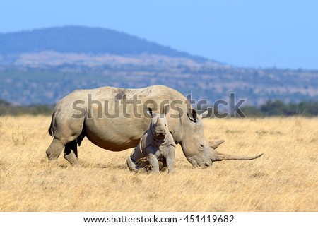 Rhino on savannah in National park of Africa - stock photo