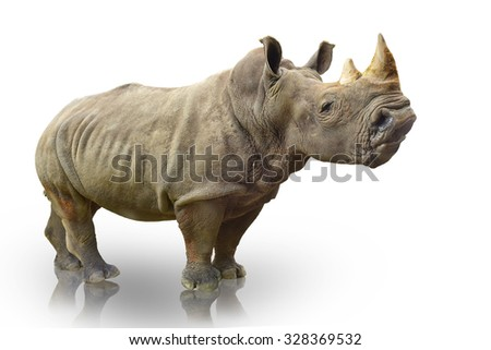 rhino or rhinoceros on white background. This has clipping path. - stock photo