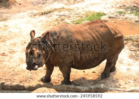 rhinoceros a large, heavily built plant-eating mammal with one or two horns on the nose and thick folded skin