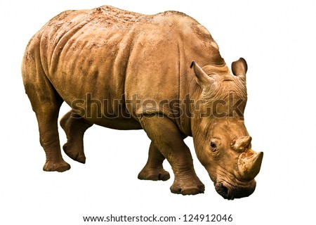 Rhinoceros in a spanish park - stock photo