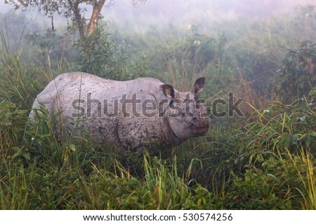 Rhinoceros in Kaziranga National Parc in India