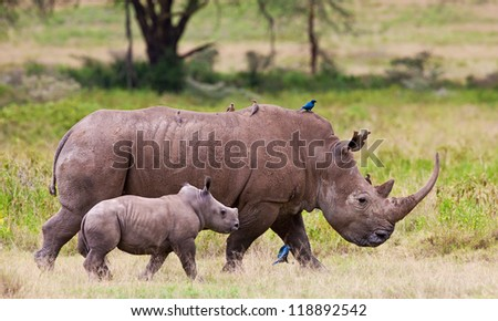 Rhinoceros with her baby in Lake Nakuru National Park, Kenya, Africa