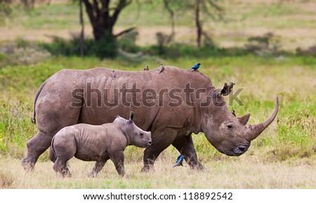 Rhinoceros with her baby in Lake Nakuru National Park, Kenya, Africa - stock photo