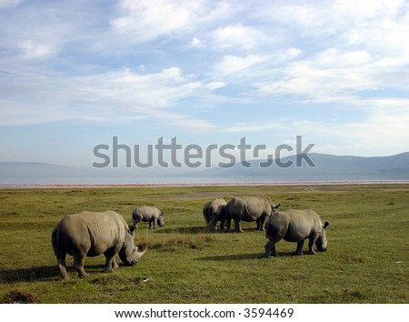 Rhinoceroses at Lake Nakuru National Park