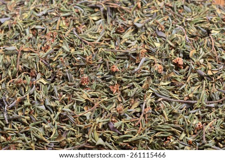 Rhododendron adamsii - dried branches  for the preparation of healing tea beverage - stock photo