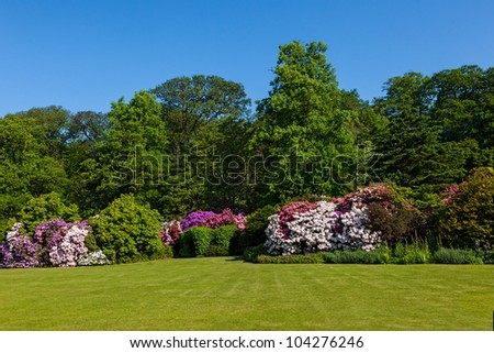 Rhododendron Azalea Bushes and Trees in Beautiful Summer Garden in the Sunshine - stock photo