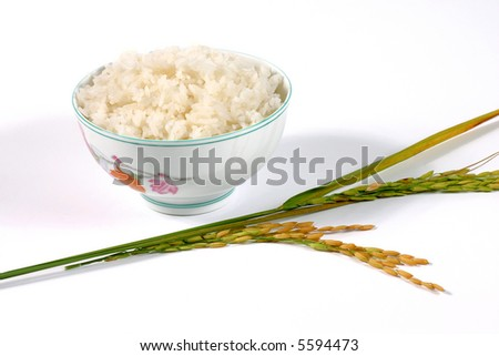 rice bowl on the white background