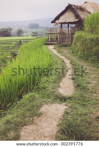 Rice cultivation fields in Bali. Footpath to stable in village. - stock photo