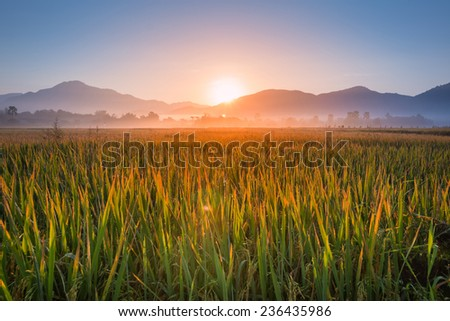 rice farm and sunrise on mountain background of chiang mai, thailand - stock photo