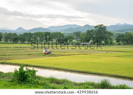 Rice field and farming in Chiang Rai province, Thailand