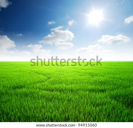 Rice field green grass blue sky cloud cloudy landscape background - stock photo