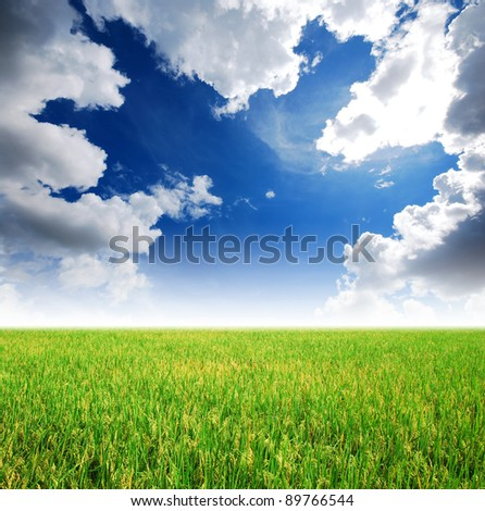 Rice field green grass blue sky cloud cloudy landscape background yellow - stock photo